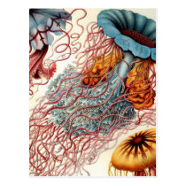 Vintage Colorful Jellyfish Postcard