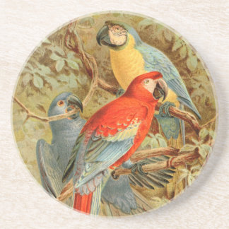 Vintage Colorful Macaws Drink Coaster