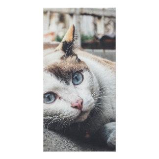 Vintage Colors Cat Card