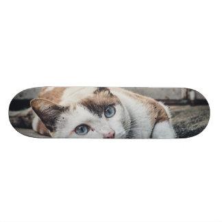 Vintage Colors Cat Skateboard Deck