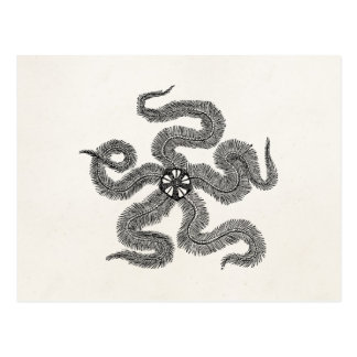 Vintage Common Brittle Star Personalized Template Postcard