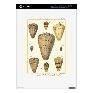 Vintage Cone Shells Decal For iPad 3