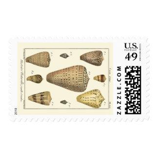 Vintage Cone Shells Postage