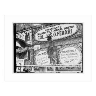 Vintage Coney Island, Dreamland Postcard