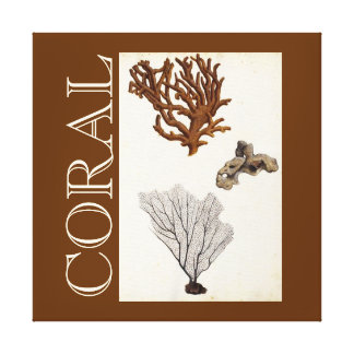 Vintage Coral Drawings Modern Art Canvas