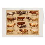 Vintage Cow Calf Bull Dairy Cows Farm Illustration Cards