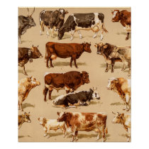 Vintage Cow Calf Bull Dairy Cows Farm Illustration Poster