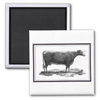 Vintage cow etching with borders magnet
