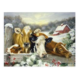 Vintage Cow Image Post Card