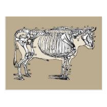 Vintage Cow Skeleton Postcard