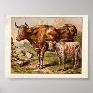 Vintage Cows Poster