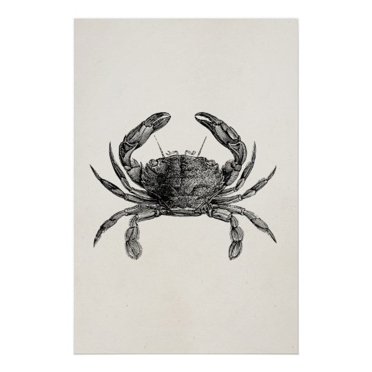 Vintage Crab Antique Crabs Personalized Template Poster Zazzlecom