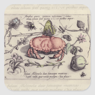 Vintage Crab, Botanicals, Insects, and Flowers Square Stickers