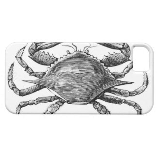 Vintage Crab Drawing iPhone 5 Cases
