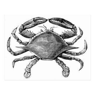 Vintage Crab Drawing Postcard