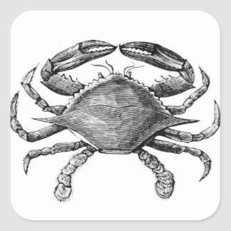 Vintage Crab Drawing Square Stickers