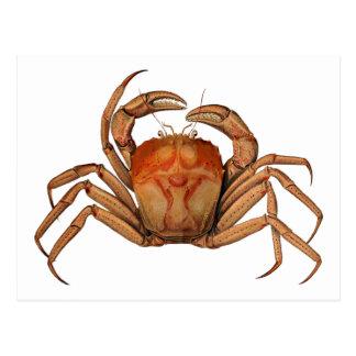Vintage Crab Illustration Postcard