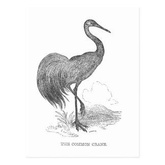 Vintage Crane Postcard