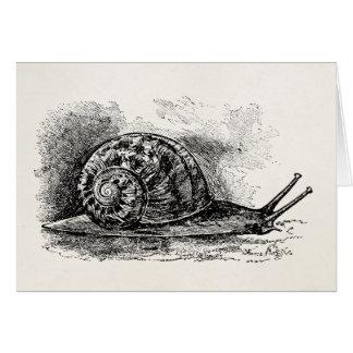 Vintage Crawling Snail Antique Template Card