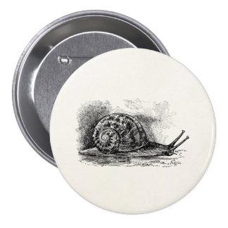 Vintage Crawling Snail Antique Template Pinback Button
