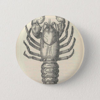 Vintage Crayfish Illustration (1896) Pinback Button