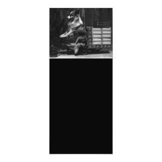 Vintage Crazy Dog Riding Wagon Photo Card