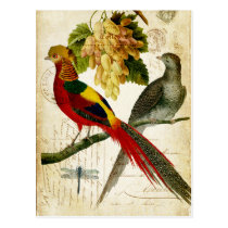 Vintage Crested Birds on Handwritten Carte Postale Postcard