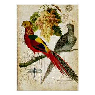Vintage Crested Birds on Handwritten Carte Postale Poster
