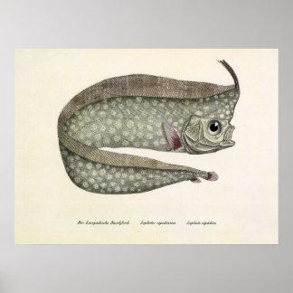 Vintage Crested Oarfish Fish,Marine Aquatic Life, Poster