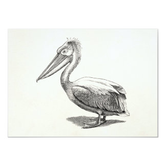 Vintage Crested Pelican Antique Bird Template