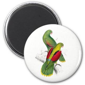 Vintage Crimson Winged Parakeet Magnet
