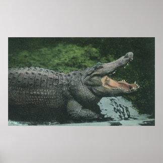 Vintage Crocodile Marine Animal Life Reptile Poster