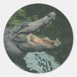 Vintage Crocodile, Marine Animal Life Reptile Round Sticker