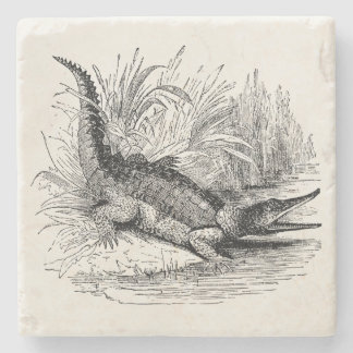 Vintage Crocodile - Reptile Template Blank Stone Beverage Coaster