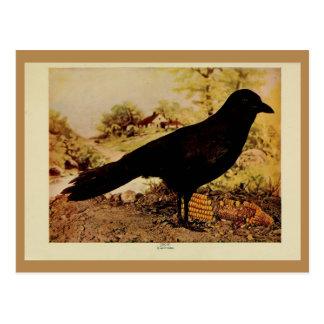 Vintage crow color litho photo postcard