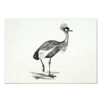 Vintage Crowned Crane Bird Illustration Template