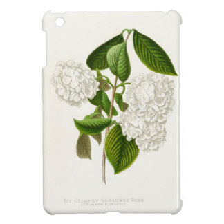 Vintage Crumpled Gueldres Rose iPad Mini Cases