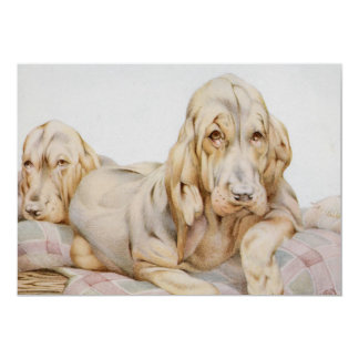 Vintage Cute Bloodhounds, Puppy Dogs by EJ Detmold 5x7 Paper Invitation Card