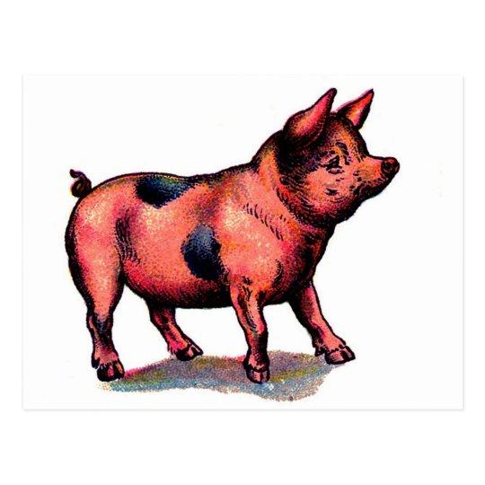 Vintage Cute Pig Piglet Postcard