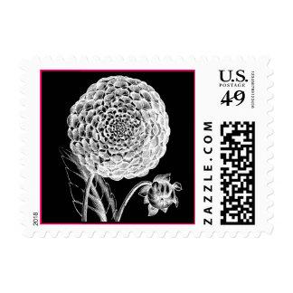 Vintage Dahlia Engraving postage stamp