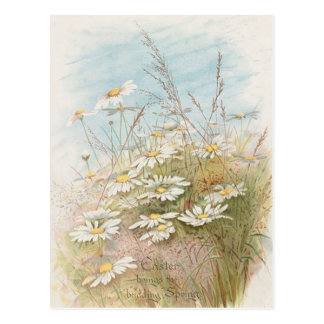 Vintage Daisies In A Field Easter Card Post Card