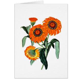 Vintage Daisy - Gazania Splendens Cards