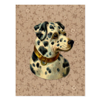 Vintage Dalmation Dog Print Postcard