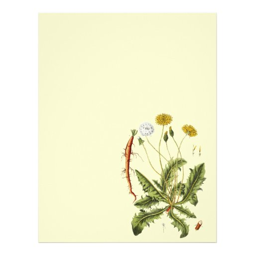 """Vintage Dandelion Illustration 8.5"""" X 11"""" Flyer"""