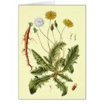 Vintage Dandelion Illustration Cards