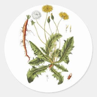 Vintage Dandelion Illustration Classic Round Sticker