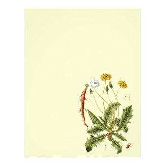 Vintage Dandelion Illustration Flyer Design
