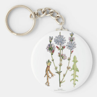 Vintage de la achicoria botánico llavero redondo tipo pin