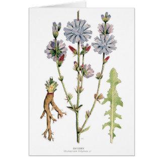 Vintage de la achicoria botánico tarjeta pequeña