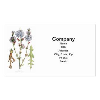 Vintage de la achicoria botánico tarjetas de visita